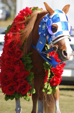 Patrick, dressed as the famous racehorse Secretariat, is the official mascot of the Secretariat Festival.