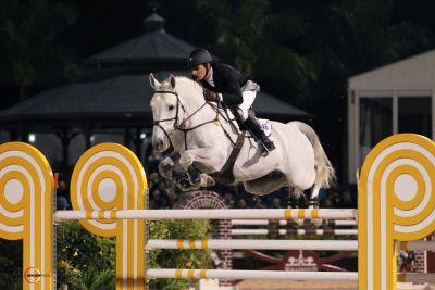 Holsteiner Stallion - Calucci