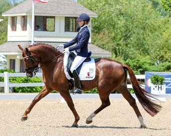 Zweibrucker Stallion - Gallant Reflection HU