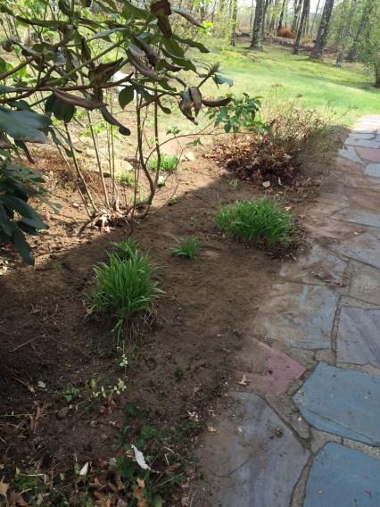 how to start a flower garden for beginners  a step