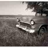 car-under-tree-tc-dakota