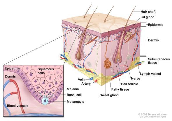 http://www.siteman.wustl.edu/CancerDetails.aspx?id=788&xml=CDR62802.xml