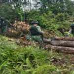 Satgas Pamtas Yonif 407/PK Temukan Kayu Hasil Pembalakan Liar Saat Patroli