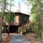 Treehouse Villas at Disney's Saratoga Springs Resort and Spa
