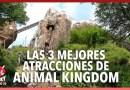 Las mejores atracciones de Animal Kingdom