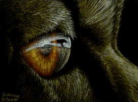 Title: Looking for Home ACEO, Artist: Sidney Eileen, Medium: colored pencil on black paper