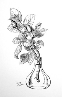 Title: Rose Buds - Croquille Nib, Artist: Sidney Eileen, Medium: ink on paper