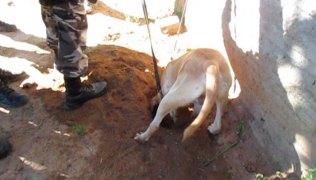 Policiais-usaram-cães-farejadores-para-localizar-a-droga-que-estava-enterrada