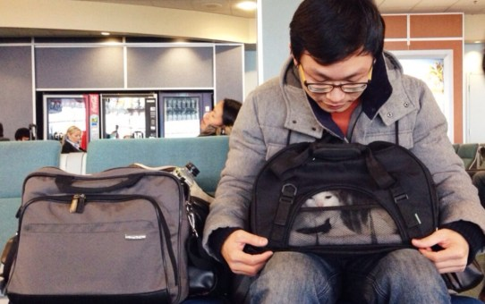 (寵物出國) 帶貓咪從台灣回加拿大-- 溫哥華