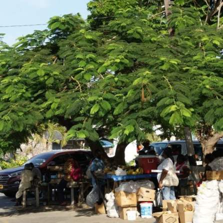 Markt Bay Road