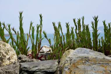 Fishguard Pflanzen
