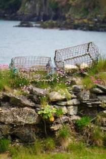 Hummerfallen Fishguard