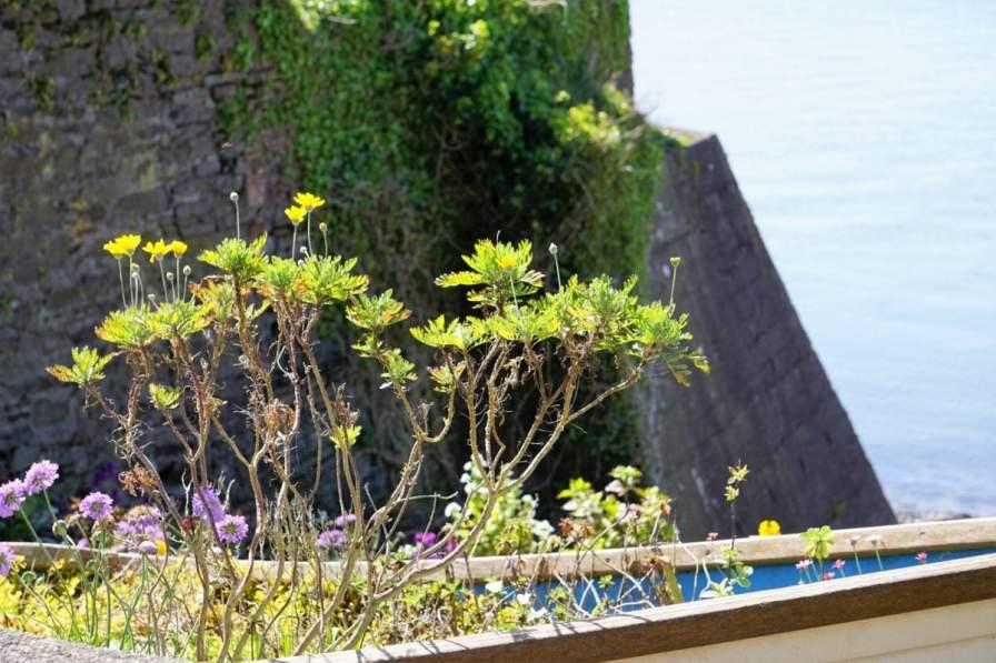 Titanic Memorial Garden Pflanzen Blumen