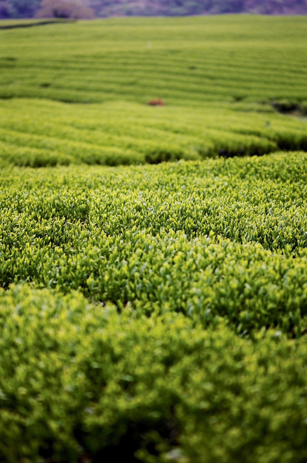 26190028 - L'île de Jeju - coree-du-sud, asie, a-faire