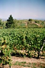 8835016 - La ViaRhôna - restos, france, europe, autriche, a-faire