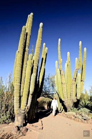 DSC_0395 - Carnet d'adresses à Scottsdale, AZ - hotels, etats-unis, arizona, amerique-du-nord, a-faire