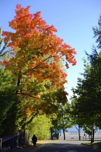 srgb9163 - Le vieux Trois-Rivières par une belle journée d'automne - quebec, canada, amerique-du-nord, a-faire