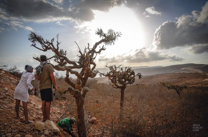socotra-4898 - L'île de Socotra, le dernier paradis perdu! - yemen-asie, asie, a-faire