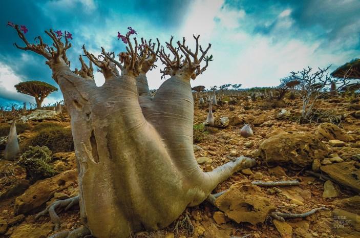 socotra-5147 - L'île de Socotra, le dernier paradis perdu! - yemen-asie, asie, a-faire