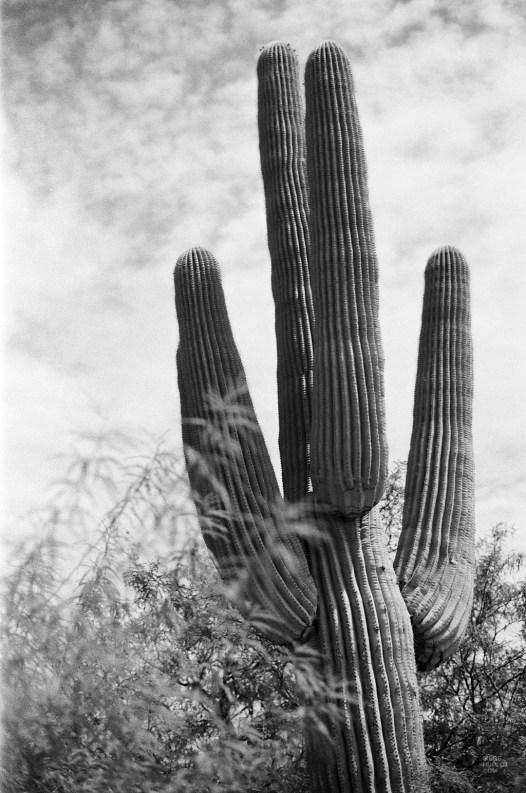 000001950013 - L'Arizona de A à Z - etats-unis, featured, destinations, arizona