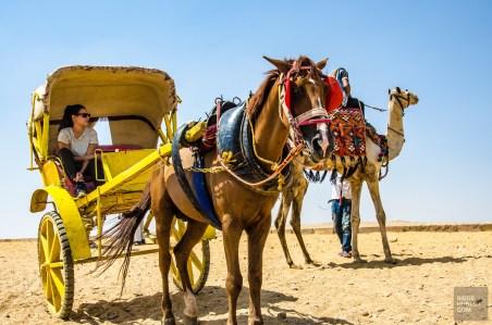 SHegypte-14 - Les merveilles de l'Égypte - featured, egypte, destinations, afrique, a-faire