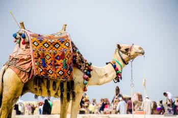SHegypte-21 - Les merveilles de l'Égypte - featured, egypte, destinations, afrique, a-faire