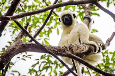 MadaRN34-7327 - Road trip à Madagascar (Partie 2) - rode-trip, madagascar, featured, destinations, afrique, a-faire