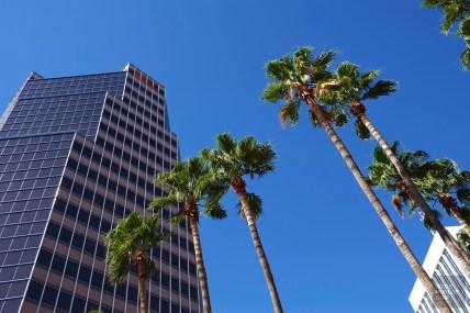 Palmiers - Tucson, AZ - Tout sur Tucson - Amérique, États-Unis, Arizona