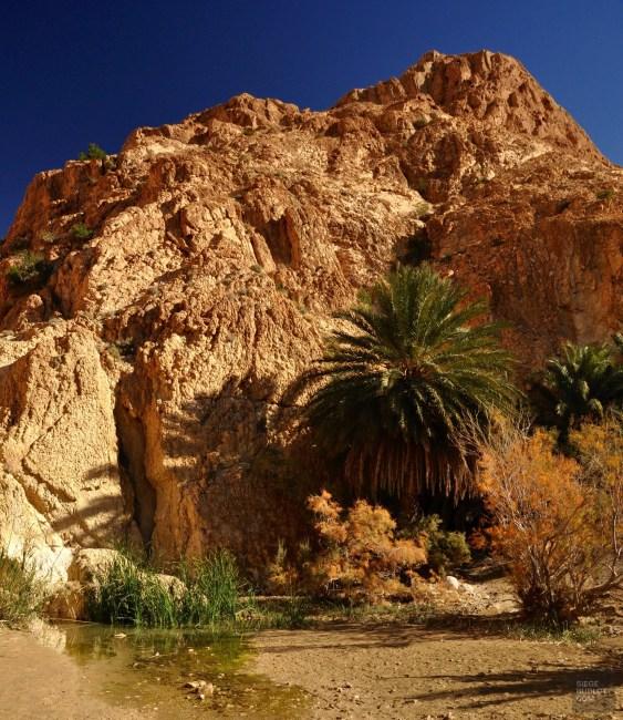 oasis montagne palmier - Chebika - Tunisie, de la mer au désert - Afrique, Tunisie