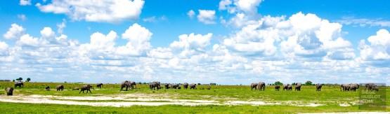 troupeau elephants 2 - parc national de chobe - Botswana… La nature a l etat pur! - afrique, botswana