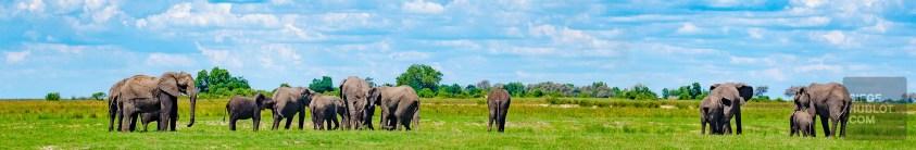 troupeau elephants - parc national de chobe - Botswana… La nature a l etat pur! - afrique, botswana