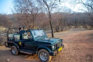 jeep safari - parc national de ranthambore - L Inde du Nord en quatre étapes - Asie, Inde