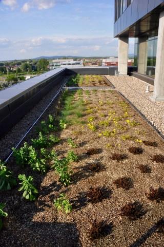 Terrasse et toit vert - Quartier Dix30 - Tous les petits plus du Alt+ - Amérique du Nord, Canada, Québec, Montréal