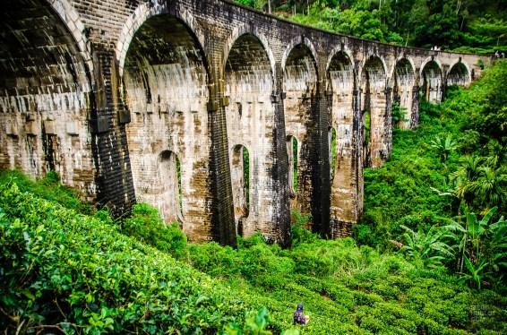 plantation de the et pont neuf arches - The, train et pont - Sri Lanka, au cœur de l ile - Asie, Sri Lanka