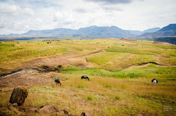 chevaux paysage - Randonnee equestre au Lesotho - Afrique, Lesotho