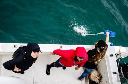 propage odeur mer - face-a-face avec un grand requin blanc - Dose d'adrénaline en Afrique du Sud - Afrique, Afrique du Sud
