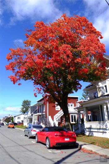 Couleurs d'automne - La région - Un épicurien à Rivière-du-Loup - Amérique du Nord, Canada, Québec, Bas St-Laurent