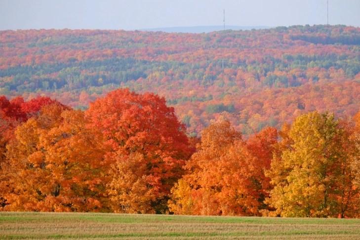 Les érables rouges - Quelques idées supplémentaires - Balade en Beauce - Amérique du Nord, Canada, Québec, Chaudière-Appalaches