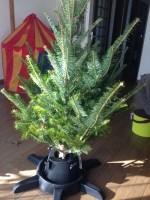 IKEAでもみの木を買ってきた!子供に本物の木のクリスマスツリーを見せよう