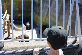 熊の仕草に子供が大爆笑。昭和新山熊牧場は思ったより狭かったけど思ったより楽しめた