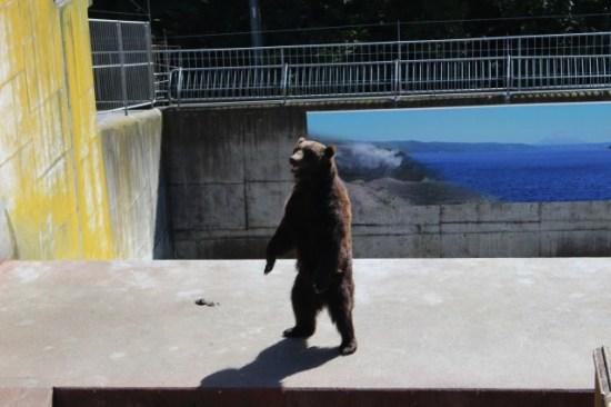 熊牧場の熊
