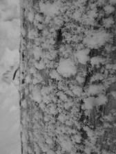 Mount Washington, January 2015