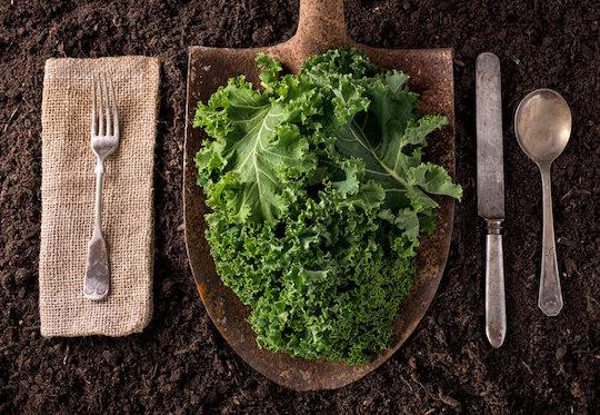 Pilar Benitez, col, kale, plant-based, snaks sanos, sientete radiante