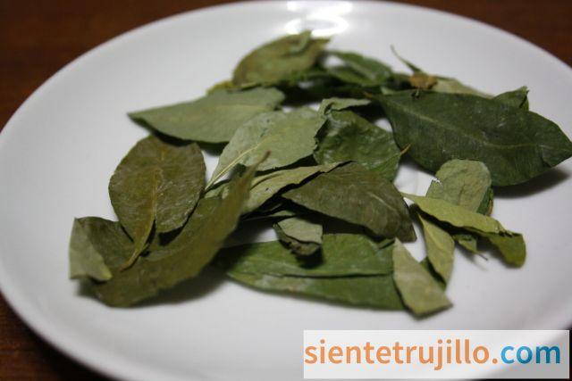 Infusión de hojas de coca