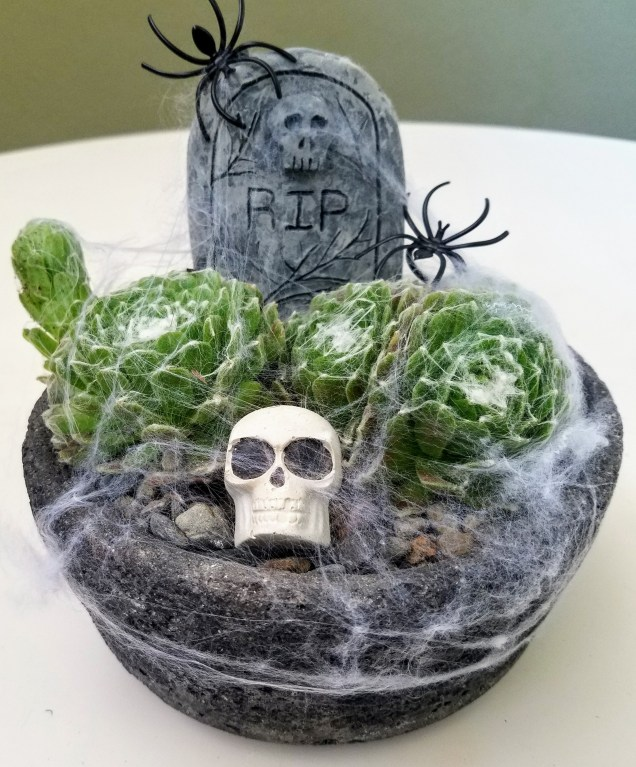 This type of succulent has cobweb-like hairs that give it a spooky appearance!