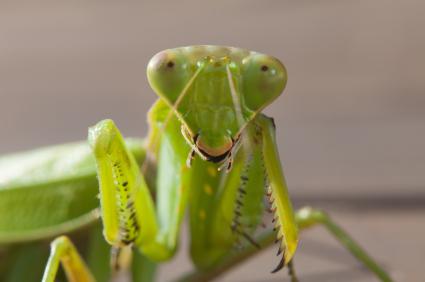 5 Fascinating Animal Mating Behaviors Explore