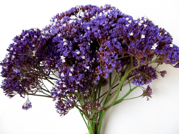 Seafoam   Sinuata  Statice    Limonium   Flowers by category     added by Sierra