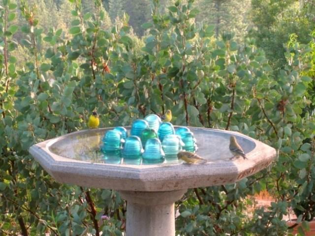 Happy birds Lesser Goldfinch