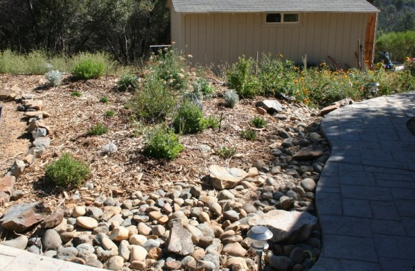 2006 Summer- Dry creek and rain garden planted with teucrium, veronica, witch hazel and blue flax.