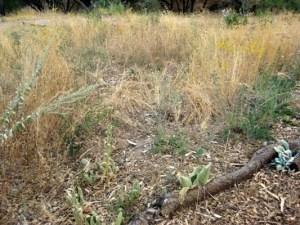 Perennial perimeter last October 2012.